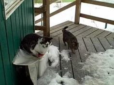 Wow!  I might move to Alaska just so I can see my pet cats peacefully hanging out with a bald eagle and a fox.