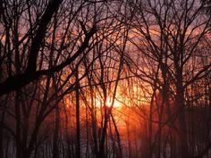 Black trees shadow the vaporous snow...I love the way the vapor reflects the orange of the sun's rays...Sweet New York!