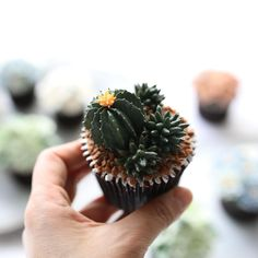 Buttercream flower cupcakes  3rd. Basic class _ #플라워케이크  #플라워케익 #대구플라워케이크  #버터크림플라워케이크  #꽃 #꽃케이크 #꽃스타그램  #케이크  #메종올리비아  #베이킹 #베이킹그램  #flowercake  #flower  #buttercreamdecorating  #buttercreamflowercake #buttercream  #buttercreamcake #koreaflower #koreanflowercake #koreabuttercreamflower #koreabuttercreamcake #koreaflowercake  #bakingram #cake #orchidcake #maisonolivia