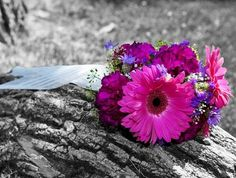 """""""Que o dia de hoje seja cheio de coisas simples, mas verdadeiras. Que tenhamos a capacidade de enxergar o amor nos pequenos gestos e que o belo seja simplesmente aquilo que é essencial dentro de nós.  Que nossas atitudes sejam para melhorar a vida, a nossa, e a dos que convivemos diariamente, pois ser feliz com as pequenas coisas, é a maior de todas as riquezas."""" ( Eliana Conti )"""
