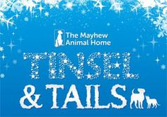 Join us on the December 2015 for our Christmas celebration to look back at the amazing year we have had helping hundreds of dogs and cats to escape a life of abandonment, cruelty and neglect. Dog Charities, Events Uk, 1st December, Christmas Tinsel, Animal House, Rescue Dogs, Dog Cat, Course Meal, Neon Signs