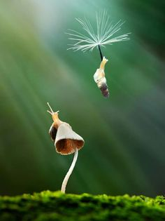 The snail version of Mary Poppins.