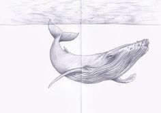 A sketch of a Blue Whale done on a moleskine sketchbook. Prints available in two sizes.-Comes with a gift print. -Express shipping available. Art - Prints - Drawings - Artist - Illustrations - Sketches - Sketchbooks