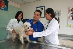 Medicina Veterinaria.