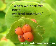 Heal the Earth | Ins