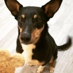 Lenny the Sevie dog!  Unsere Hundekeks Bestellung ist heute angekommen! Der erste Keks geht immer an Lenny. Wie man sieht freut er sich schon darauf! ❤🐶 Kokposknusper, Beef Stix, Leberkeks, … für eure Lieblinge gibt's gleich bei uns zum mitnehmen! 🐾  #sevieskincare #sevie #fellpflege #hundepflege #doglovers #dogcare #wien #vienna Natural Skin Care, Dogs, Nature, Animals, Purchase Order, Organic Beauty, Animales, Naturaleza, Animaux