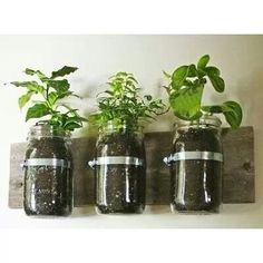 Grow your own Hanging spices