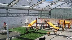 Best Picture For dog kennel indoor pet resort For Your Taste You are looking for s Dog Boarding Kennels, Pet Boarding, Shelter Dogs, Animal Shelter, Pet Shop, Casas Trailer, Indoor Dog Park, Dog Kennel Designs, Kennel Ideas