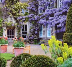 Wisteria - gorgeous!