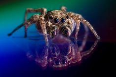 une petite araignée...
