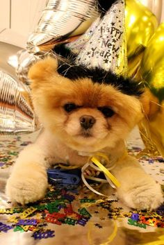 belated birthday pom. hey, sorry i forgot your birthday. i'm going to use my irresistible good looks and this confetti from party city so you'll forget all about it. pom.