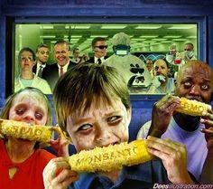 Disso Voce Sabia?: MILHO TRANSGÊNICO: OS EUA PROÍBEM E O BRASIL LIBERA
