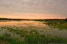 Marécages - Lac du Der, Haute-Marne (Champagne-Ardennes)