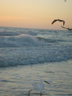 SIESTA KEY Beach #PathfinderAdventures