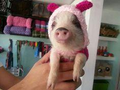 It's piglet!!!!!!