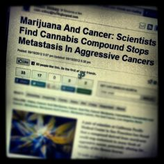 You don't say?.......... lordy people, it's been proven. Why are we still using chemo?!