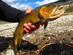 7 best national parks for fishing | MNN - Mother Nature Network