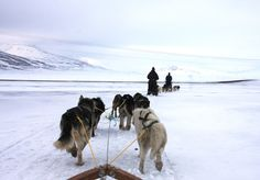Dog racing in northern norway!