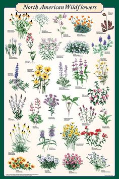 Types of Flowers – Flowers are