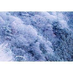 「2015/01/18 夜明けの霧氷林 #wakayamagram #紀伊山地の冬 #笹ノ茶屋峠 #樹氷 #着雪 #冬景色 #霧氷 #雪 #雪景色 #雪化粧 #雪山 #夜明け #和歌山」