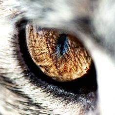 Minni - Razor Sharp Cat Eye by Peter Gorges, via Flickr