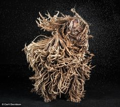 Shake, a new book by Carli Davidson showing photographs of dogs caught mid-shake