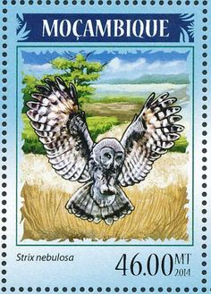 Great Grey Owl stamps - mainly images - gallery format