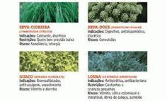 ervas medicinais e suas utilidades - Pesquisa Google