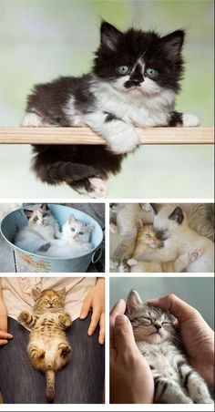 Kittens are probably the best thing that ever happened to the world.
