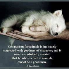 The Great Spirit blesses all animals for their love and devotion.