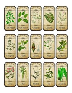 about Vintage inspired assorted herb spice food tea bottle jar labels stickers Herb Labels, Spice Jar Labels, Spice Jars, Spice Bottles, Plant Labels, Vintage Labels, Vintage Ephemera, Etiquette Vintage, Images Vintage