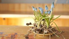 Plants, Beauty, Beleza, Plant, Planting, Planets