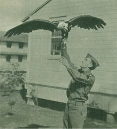 "Young Abe the eagle • 101st Airborne Division's World War II mascot, Young Abe, Fort Bragg, N.C. Source: ""The Epic of the 101st Airborne: A Pictorial Biography of the United States 101st Airborne Division compiled and arranged by the unit Public Relations Office, 1945."""