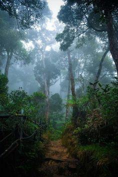 Borneo Rainforest - lush and dark, misty and beautiful.