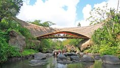 Bridge by Ibuku Architecture. Made entirely of bamboo. The designer even drove his jeep across it.