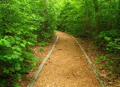Cary North Carolina Hidden Treasure – Hemlock Bluffs (wake County Raleigh Area)