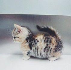 cat, cats, cute. kittens