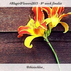 #BlugirlFlowers2013 Instagram Photo Contest finalist @thisischloe_