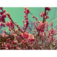 Blossoms in jeonju