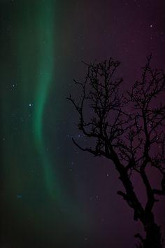 Norway winter and Aurora