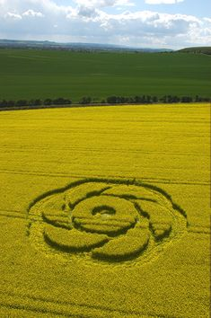 Golden Ball Hill, Wiltshire, England. 1st May 2005, Oilseed Rape.