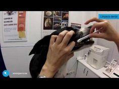 Cómo limpiar los dientes al perro - YouTube