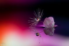 Light in the dark by Miki Asai on 500px