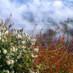 Esta vida es un cofre del tesoro llena de magia. #landscape #flowers #mist #foggy #mountain #forest #clouds #outdoors #travel #adventure #nature #photography #documentary #discovery #natgeo #natgeowild #natgeotravel #bbc #bbcearth #bbctravel