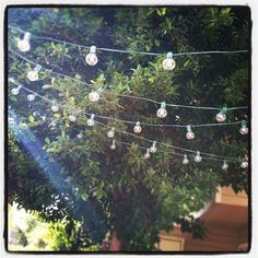 Target patio lights...thought they weren't waterproof, but might have to try them.