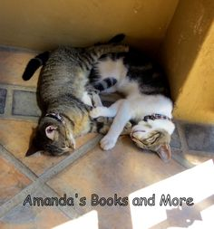 Our #kittens - too cute!  http://abooksandmore.blogspot.com