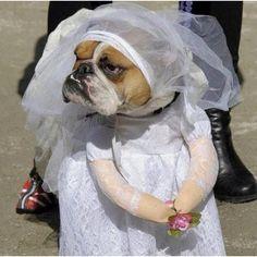 Bridezilla!! not a happy bride :P