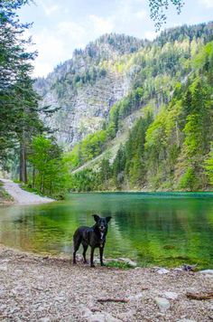 Austria Travel, Seen, Forest Landscape, Northern California, Homeland, Where To Go, Places To See, The Outsiders, Hiking