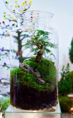 "petiteplanet: ""Landscape-in-a-jar is a thing! "" I should go back and do some aquarium work at once."