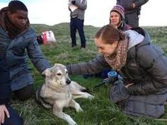 wolfblood haha getting to meet a real wolf!